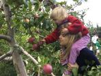 Apple picking for our own apple juice and Middle Coombe Cider. Courses available.