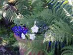 Perth Holiday Home - Garden