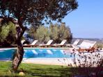 Swimming pool inside the olive trees and the vineyards