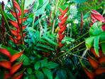 Tropical red heliconias - yes, they're real!