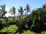Quintessential Hawaii