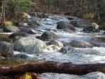 Trout Brook on my property