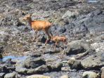 Deer down on the beach