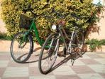 Prestamos estas bicicletas sin cargo ideales para pasear por los alrededores,