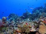 Our coral reefs are amazing