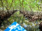 GO on a mangrove kayak tour