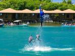 Check ou the dolphins at AKR