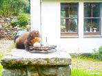 Guest watching Pine Marten from kitchen window