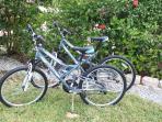 2 bikes to cruise Olde Naples