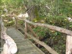 Trail with Bridge over the Creek