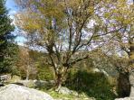 La nature en automne (1)
