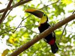 a toucan checks us out