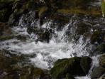 Close up of rushing river at bottom of garden!
