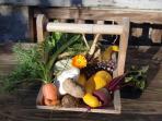 Home grown Danderi organic vegetables !