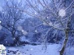 Snow beautiful snow !