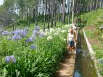 Levada walking in Madeira is an endless pleasure