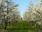 It's springtime at Les Marais and the apple, cherry and plum trees surrounding you are so pretty