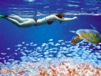 Great Snorkeling at the reef! We arrange this for you.