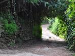 Path leading to the house