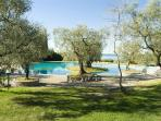 free entrance included to our wonderful swimming pool among olives!
