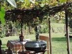 ..organizzare un barbecue all'ombra del pergolato di uva fragola..