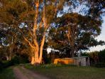 The Gums - Bushland Views