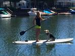 Stand Up & Paddle Board For Rent