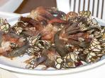 Percebes - or barnacles. A local specialty at Leo's Marisqueria in La Noria