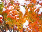 our Snowvember snow  2014