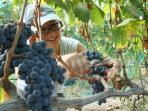 Vineyard Tours and Wine Tastings