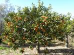 You can pick your oranges if it ist he season