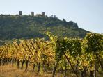vue du vignoble sur les trois châteaux d'Eguisheim
