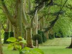 Le parc et son allée de platanes d'Orient