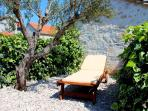 Garden with an old olive tree