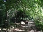 Beautiful walks in Beamish Woods, just behind Shutters