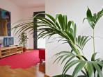 Plants dining room