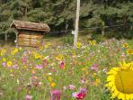 local wild flower area