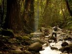 Tour the Rain Forest on a half day trip. You will truly enjoy the beauty of our island.