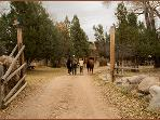 Horse corrals on property