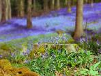 Last two weeks in May is the Bluebell season in the Forest of Dean.