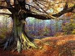 Autumn in the Forest is breathtaking. You can walk straight from your front door into the woods.