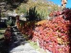 La scalinata autunno