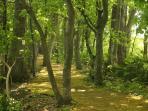 Hiking trail at Lakehouse At Toyako