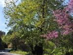 Spring Views at Sendoukia Country Villa.