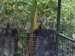 Rainbow Lorikeets & Kookaburra's waiting to be fed
