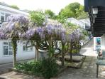 Wisteria taking over the courtyard.
