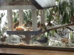 Winter birds on the birdtable outside the Kitchen window