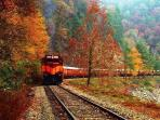 Fall train ride on The Great Smoky  Mountain Railroad