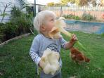 Another section of our very large garden, our grandson and one of our chickens