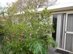 Entrance to the garden bungalow,